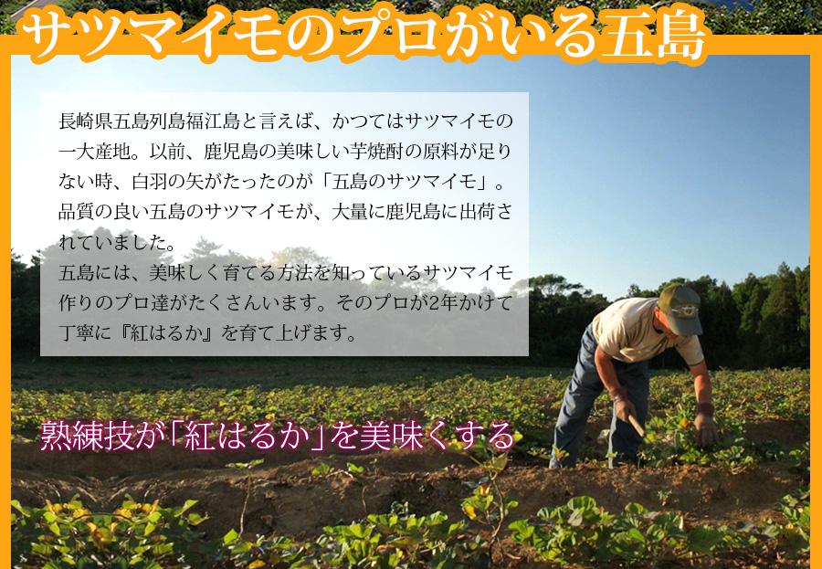 サツマイモのプロがいる五島