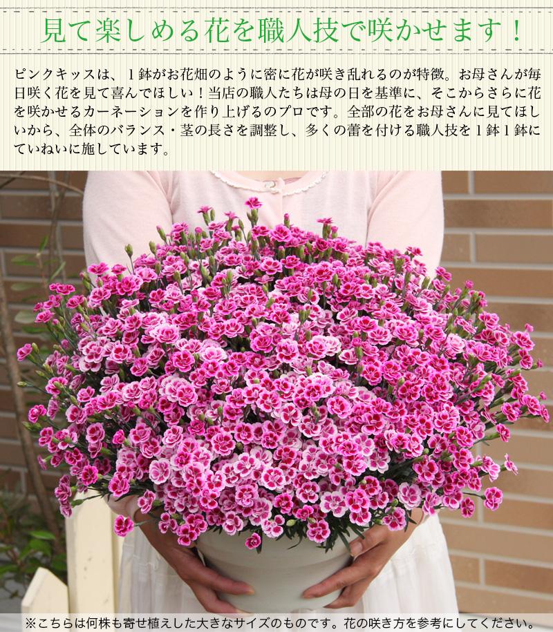 見て楽閉める花を職人技で咲かせます