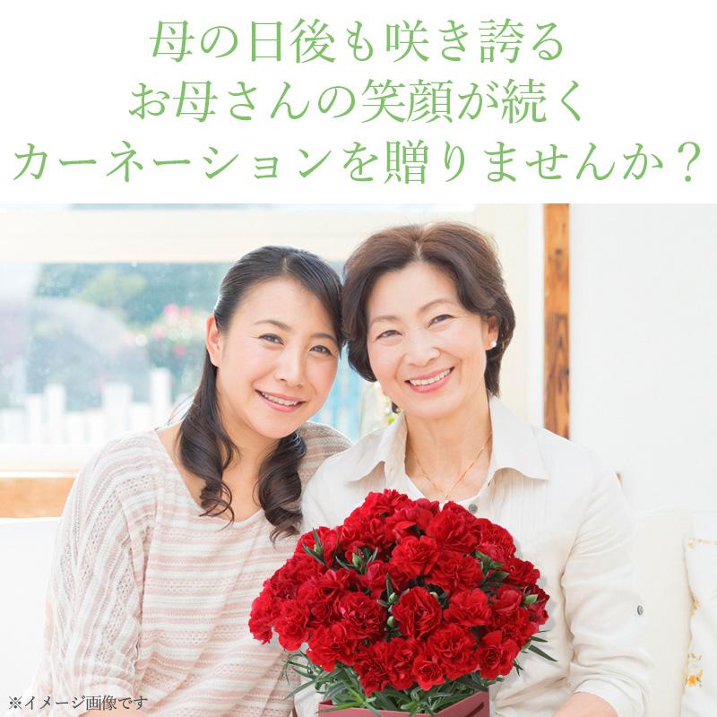母の日の後も咲き続けるカーネーション