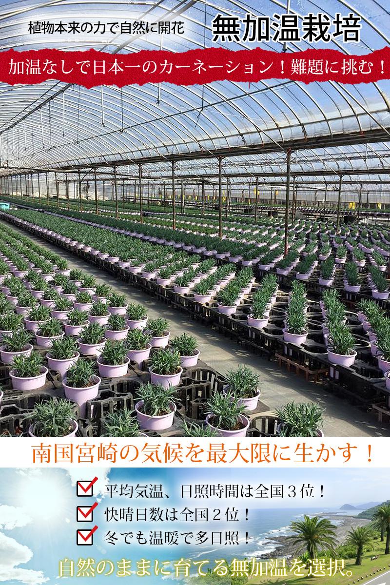 宮崎の温暖な気候を利用して無加温栽培