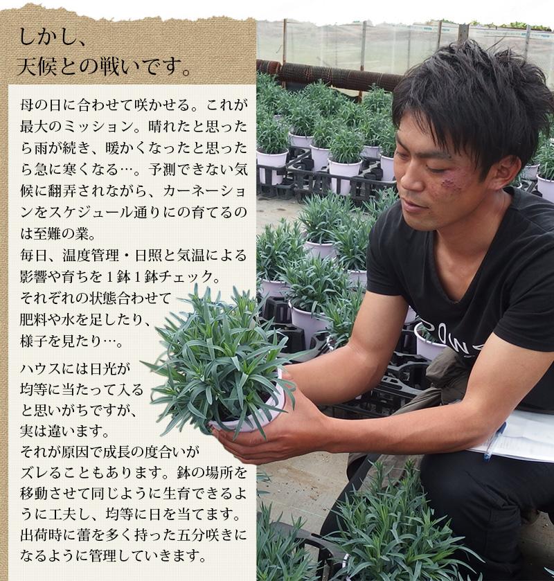 無加温栽培は難しい