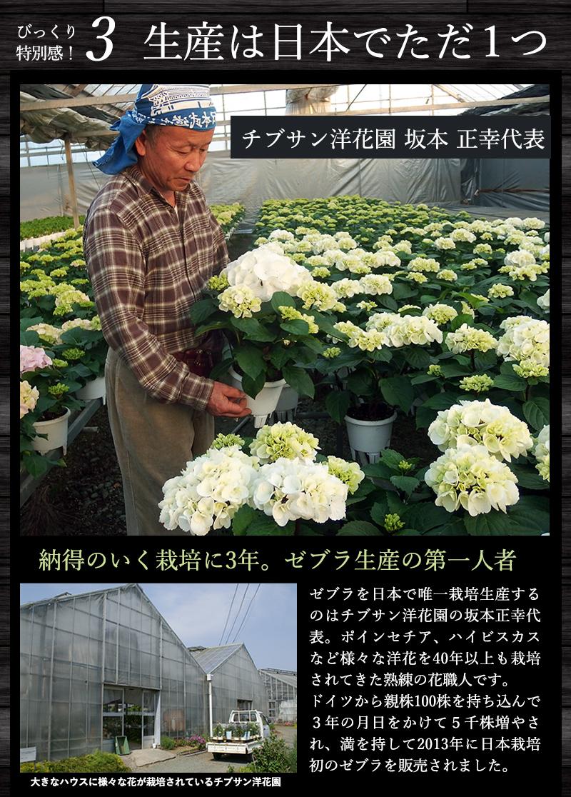 生産は日本でただ一つ