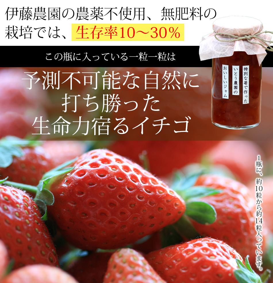 熊本伊藤農園、農薬不使用イチゴジャム