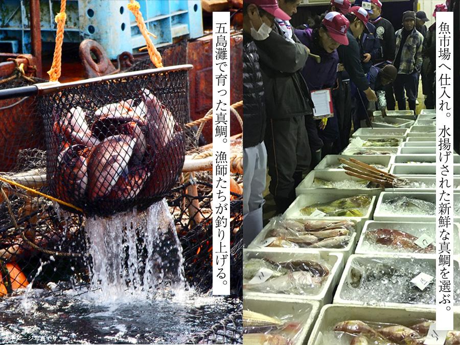 魚市場で鯛を買い付け